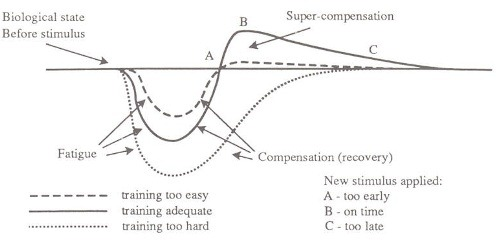 supercompensation-curve