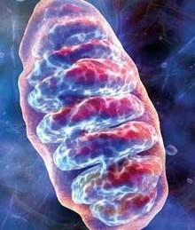 mitochondrion_x220