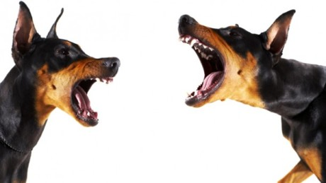 dog-15-new-dog-fights-image-01-610x428