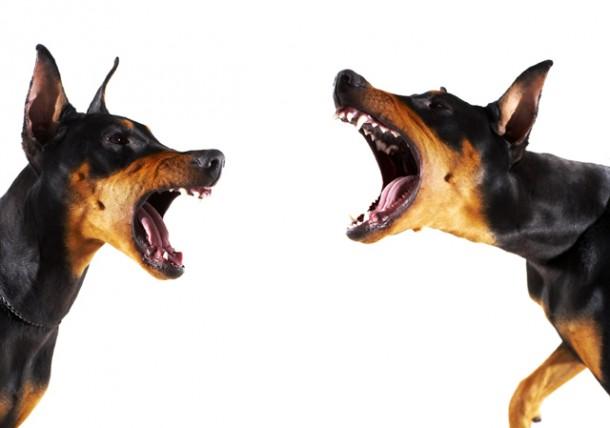 dog-15-new-dog-fights-image-01-610x428