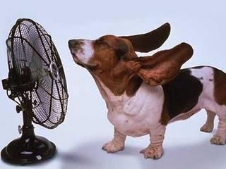 heat-stroke (1)